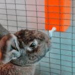Как сделать поилку для кроликов: 5 способов своими руками +фото